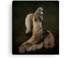 Beautiful Afghan Hounds  Canvas Print