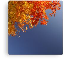 primary colors in nature Canvas Print