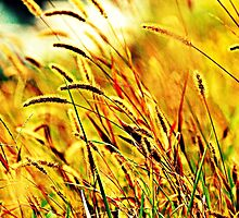 Autumn Grass by Funmilayo Nyree