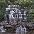 Liffey Falls - From the Liffey River by mspfoto