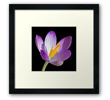 Spring Perfection Framed Print