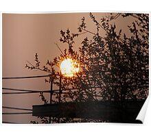 Sundown behind the Tree Poster