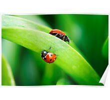 Ladybugs Poster