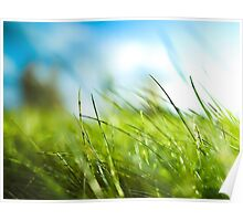 Close up Grass Poster