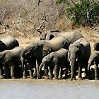 Elephants(Elaphantidae) at the waterhole by Elsa Dyason