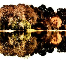 Trees and Lake by Smaxi