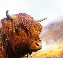 Highland bull by oconnart