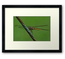 Amber dragon on a guy wire, Front Framed Print