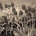 sepia tulip sympathy by dedmanshootn