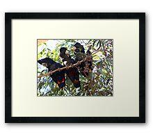 Black Cockatoo Family Framed Print