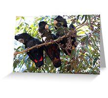 Black Cockatoo Family Greeting Card