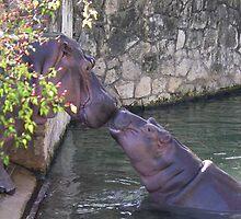 Hippos by Lisa Dugger