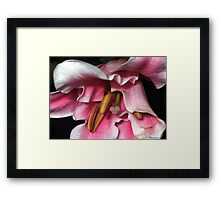 When The Rumba Rhythmn Starts To Play.... Framed Print