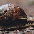 snail by dvart