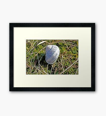 Empty Snail Framed Print