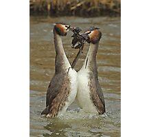 Penguin Dance Photographic Print