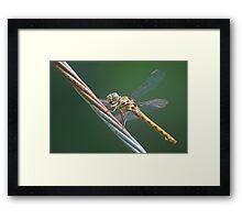 Amber dragon on guy-wire, Side Framed Print