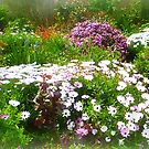 My Front Garden - with Paint Effect by EdsMum
