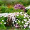A Spring Garden - Gorgeous Flower Cards*