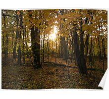 Wooded Tranquility- sunset in the woods Poster