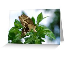 Yellow butterfly on orange tree Greeting Card