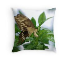 Yellow butterfly on orange tree Throw Pillow