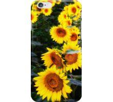 Sunflower Row iPhone Case/Skin