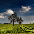 The Field by Dave Hudspeth