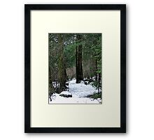 Woodland Dawn Framed Print