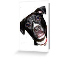 A Sweet Pit Bull Greeting Card