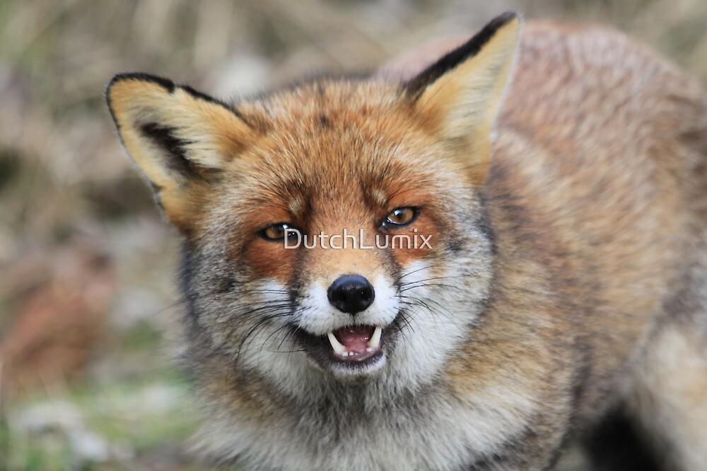 Red Fox - 1649 by DutchLumix