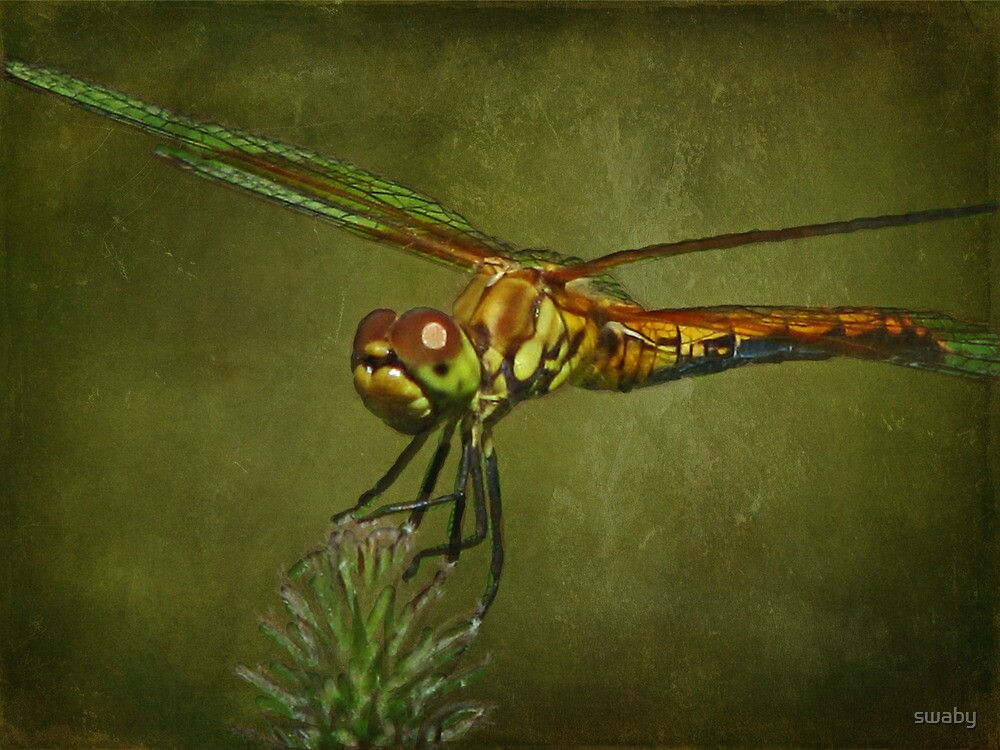 Dragonfly by swaby