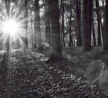 Shining Through by KellyHeaton