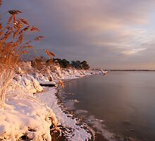 Snow-covered Dawn Along the Shore by genez