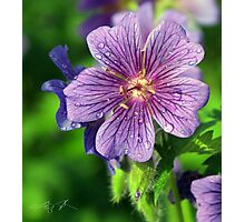 Refreshed in Purple Photographic Print