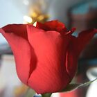 the red rose by LisaBeth