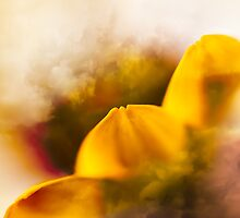 Petals in the clouds by Su Walker
