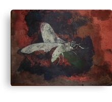 Arizona Moth Canvas Print