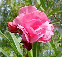 Pink flower from Hathead by KazM
