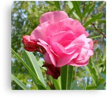 Pink flower from Hathead Canvas Print