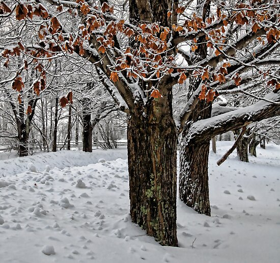 Maple Trees - Holding Onto Their Color by T.J. Martin