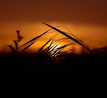 Shadow Grass by Chris Fletcher