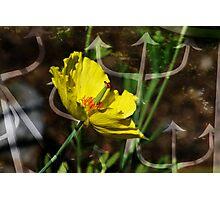 YellowFlower Photographic Print