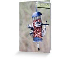 Long tailed tits  Greeting Card