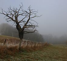 Tree at Cuerden Valley Park by RedMann