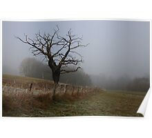 Tree at Cuerden Valley Park Poster