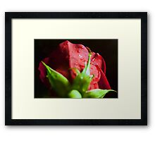 Behind The Rose Framed Print