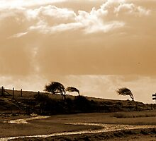 The Wind went Thataway by mikebov