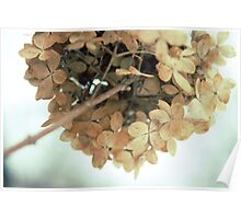 Hydrangea in winter Poster