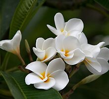 Plumeria Boquet (Poipu, Kauai, Hawaii) by Brendon Perkins